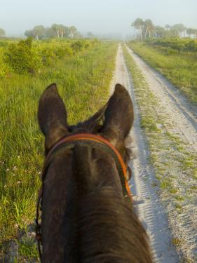 Horse Trails at Kissimmee Prairie Preserve State Park, Florida, Usa by Maresa Pryor