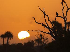 USA, Florida. Sun rising over the Orlando Wetlands Park. by Maresa Pryor