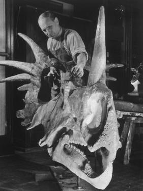 Artist Coloring Model Made from Original Skull of Styracosaurus, American Museum of Natural History by Margaret Bourke-White