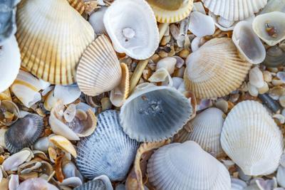 USA, Florida. A close-up photograph of beach sand and shells.