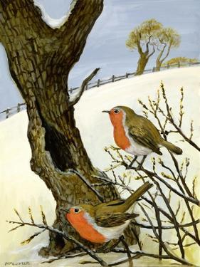 A Pair of Robins by Margaret Loxton