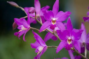 Pink Orchid by Margaret Morgan