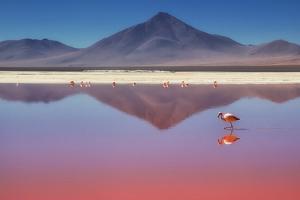 Pink Morning by Margarita Chernilova