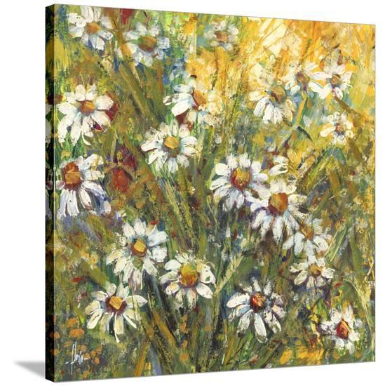 Margherite nel sole-Luigi Florio-Stretched Canvas Print