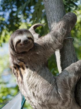 Sloth Living in Parque Centenario by Margie Politzer