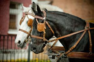 Horses in Carriage by mari_art