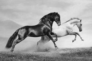 Horses Run by mari_art