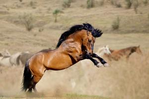 Stallion in Dust by mari_art