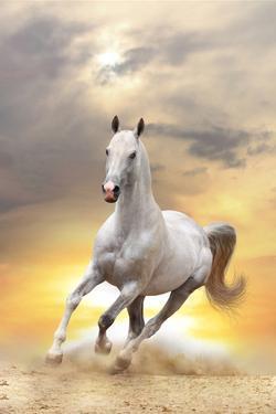 White Horse in Sunset by mari_art