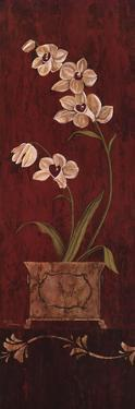 Orchid Allure II by Maria Donovan