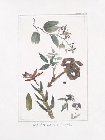Botanica do Brasil - Floresta