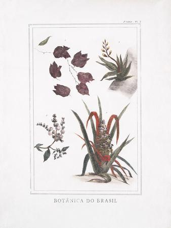 Botanica do Brasil - Sai