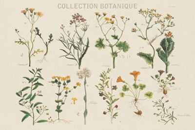 Collection Botanique by Maria Mendez