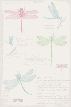 Dragonfly Diary by Maria Mendez