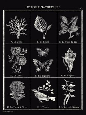 Histoire Naturelle I by Maria Mendez
