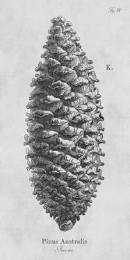 Pinus Australis by Maria Mendez