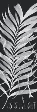 Plantes Exotique I - Noir by Maria Mendez