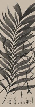 Plantes Exotique I by Maria Mendez