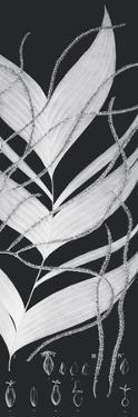 Plantes Exotique Ii - Noir by Maria Mendez