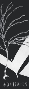 Plantes Exotique Iii - Noir by Maria Mendez