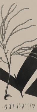 Plantes Exotique III by Maria Mendez