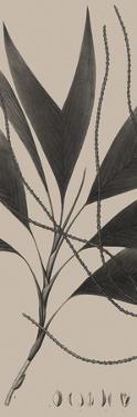 Plantes Exotique IV by Maria Mendez