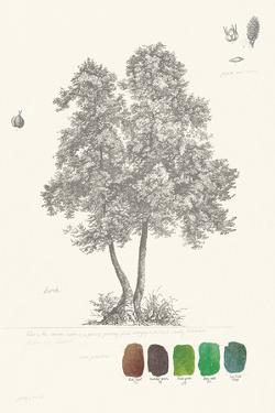 Tree Sketch - Birch by Maria Mendez