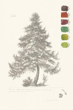Tree Sketch - Larch by Maria Mendez