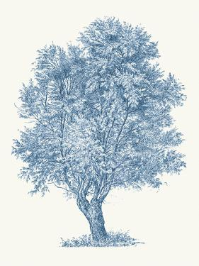 White Willow by Maria Mendez