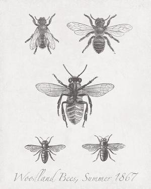 Woodland Insects I by Maria Mendez