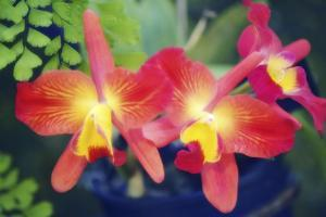 Orchids (Slc. Angel's Fantasy) by Maria Mosolova
