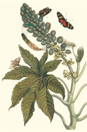 Castor Oil Tree with a Moth by Maria Sibylla Merian