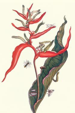 Heliconia and Potter Wasp by Maria Sibylla Merian