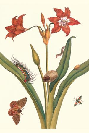 Nocturnal Moth Caterpillar on a Barbados Lilly and a Coreidae Bug by Maria Sibylla Merian