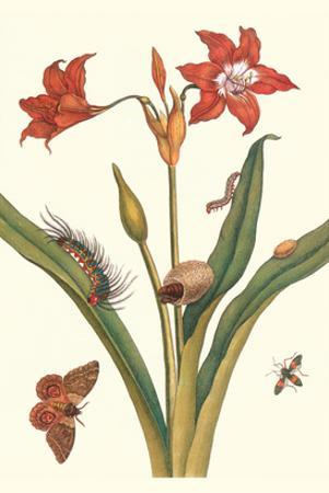 Nocturnal Moth Caterpillar on a Barbados Lilly and a Coreidae Bug