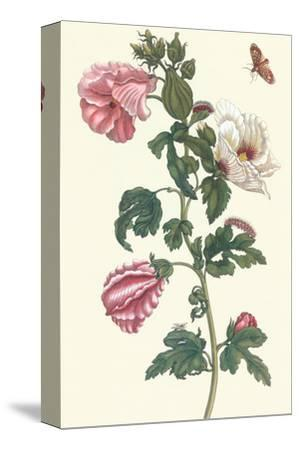 Roselle with Fall Webworm by Maria Sibylla Merian