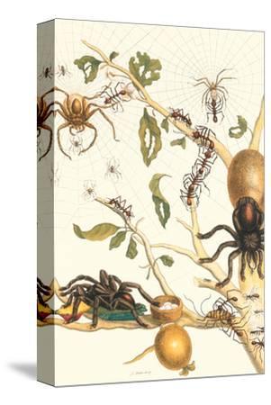 Tarantulas and Army Ants by Maria Sibylla Merian