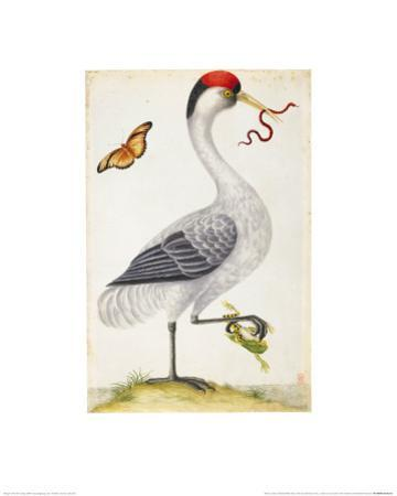 White Bird, with Red and Black Crest, a Snake in its Mouth by Maria Sibylla Merian