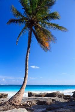 Tulum Mexico Single Tree on Beach by Maria Swärd