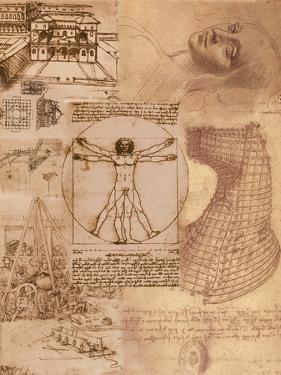 Da Vinci by Maria Trad