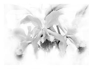 Orchid by Maria Trad