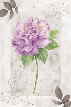 Rose 1 by Maria Trad