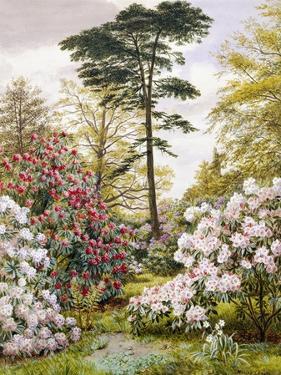 A Pretty Woodland Garden by Marian Emma Chase
