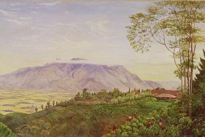 Tea Gathering in Mr. Hoelle's Plantation at Garoet, Java, circa 1875 (Board)