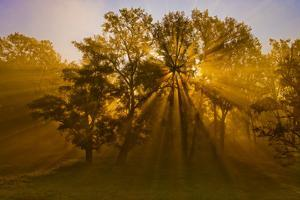 Sun Beams Passing Through Misty Trees, Montezuma National Wildlife Refuge, New York, Usa by Marie Read