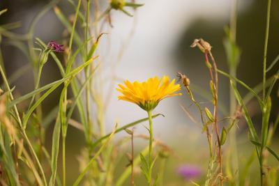 https://imgc.allpostersimages.com/img/posters/marigold-in-the-autumn-garden_u-L-Q1EXRX50.jpg?artPerspective=n