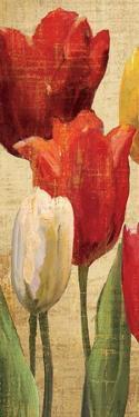 Tulip Fantasy on Cream II by Marilyn Hageman