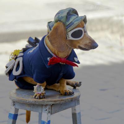 Havana, Cuba. Dog dressed-up by Marilyn Parver