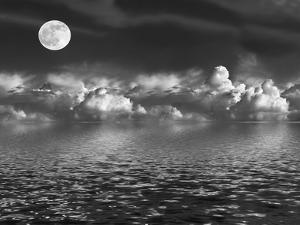 Moonlit Beauty by marilyna