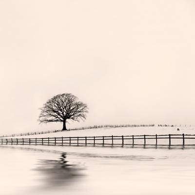 Winter Oak Tree in Snow by marilyna